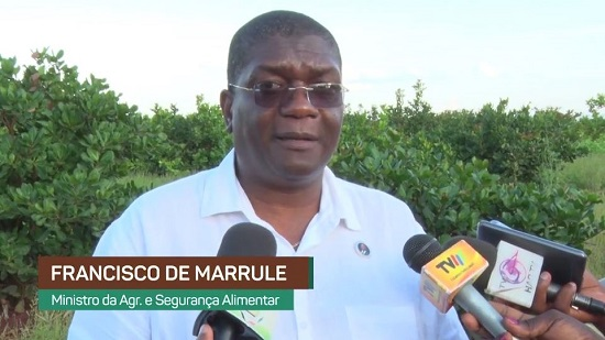 Moçambique prevê produzir 80 mil toneladas de algodão na campanha 2017-2018