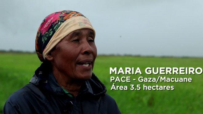 Depoimento de Maria Guerreiro, PACE – Gaza/Macuane